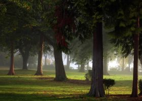 Fog in the Park by TruemarkPhotography