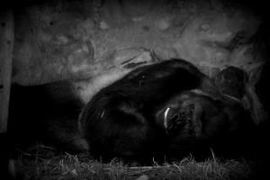 ZOO Opole, Poland by Imarsis