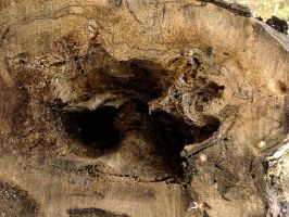 Real texture_wood_tree hole 01 by Aimelle-Stock
