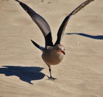 One Legged Seagull by photoquilter