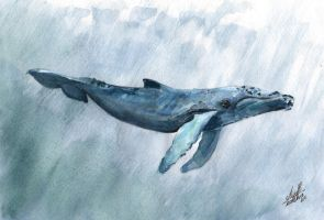 blue whale by Ealince