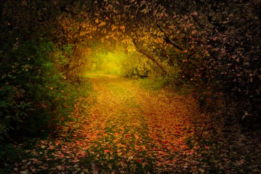 Autumn forest and mysterious path between trees by Korolevatumana