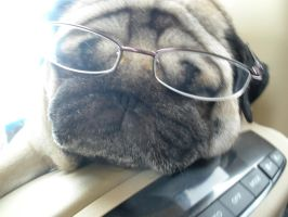 Smartical by puggers