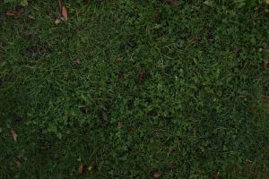 Grass (stock) by justanotherdood
