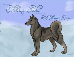 Siberian Laika Template by tailfeather