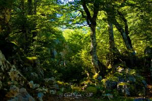 Foret-5 by CORNET-Sylvain