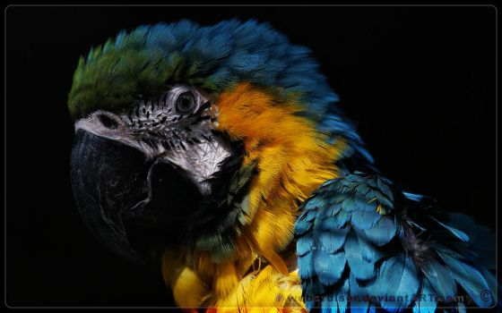 the beautiful macaw by webcruiser