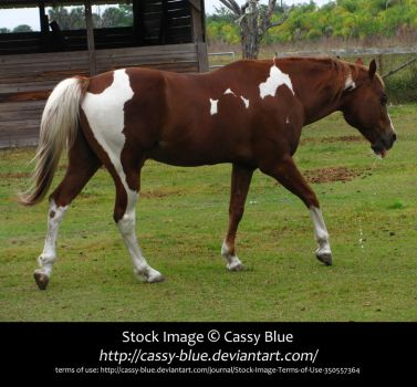 Horse Stock 1 by Cassy-Blue