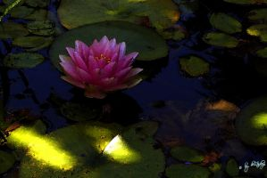 water colour lily by deLtadeep