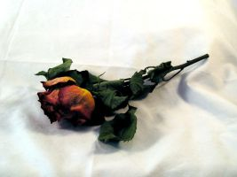FREE STOCK, Dead Rose 1 by mmp-stock