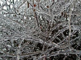 Icy Branches IV by Baq-Stock