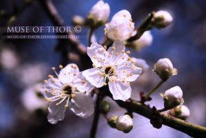 My hope for spring by Daystar-Art