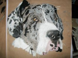 Great Dane by naruto32