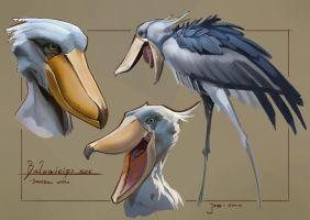 Sketchbook - Colour and Light (Shoebill) by Rubisko