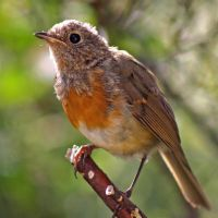 Young Robin by BlonderMoment