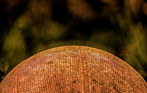 Ball HDR by Mackingster