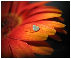 Heart Water Drop by KatherineDavis