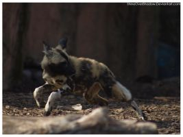 African Wild Dog - Pups 028 by ShineOverShadow
