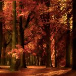 Autumn's Golden Light by Violet-Kleinert
