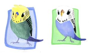 Gouache Budgies by OnyxSerpent