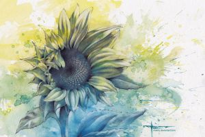 Sunflower 1.1 by mekhz