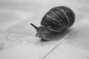 Snail by madnessisgenious
