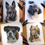 Few dog color pencil portraits by AtomiccircuS