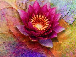 Waterlily magenta by Tackon