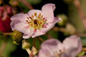 Blossom by melly4260