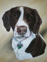 Bramble by petportraitman