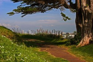 Pathway to the City by carterr
