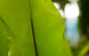 Green Leaf by MattLanham
