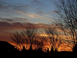 Sunset by the trees by Michies-Photographyy
