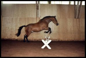 Dangi's first jump by RvS-RiverineStables