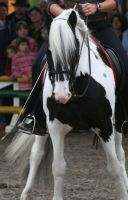 Shire Horse Show 11 by DarkestFear