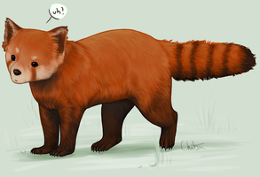 Uh - red panda by Chibii-Kira