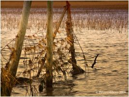 Reeds and Water 1 by Photo-Joker