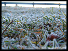Ground Frost by PhotoFinishFox