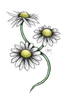 Three Daisies - Colour by carrion-christ