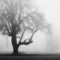 a giant in fog by aimeelikestotakepics