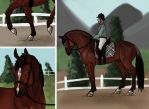 Halter and Dressage by Tuckerlyn