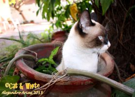 Cat in a pot 01 by Cat-n-White