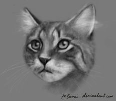 cat by mLooni