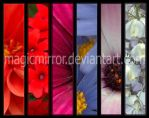 .:: Colours of my Garden ::. by magicmirror