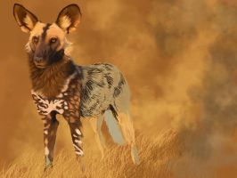 WIP African wild dog by Midnight-Sun-Art