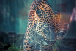 Colorful Leopard by CatAttack2014