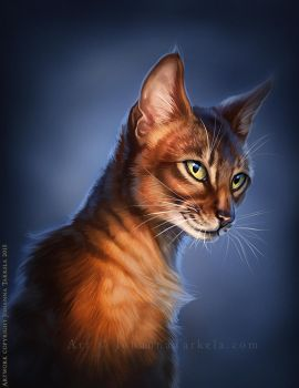 Abyssinian by Lhuin