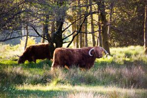 Shady Coos by FlippinPhil