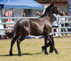 STOCK Canungra Show 2013-206 by fillyrox