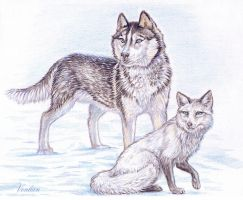 Husky and Fox by Venlian